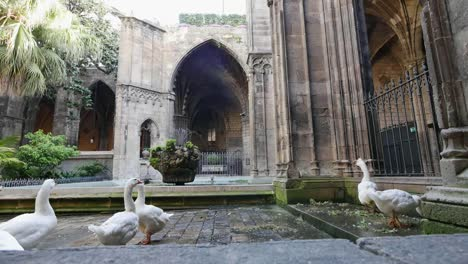 Spain-Barcelona-Cathedral-With-Door-And-Geese