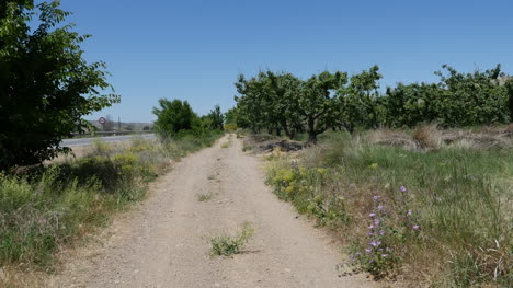 Spain-Meseta-Lane-By-Orchard