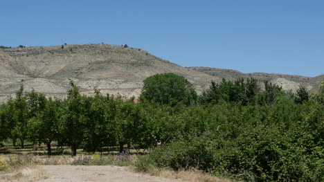 Spain-Meseta-Orchard-Below-Hill