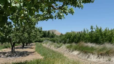 Spain-Meseta-Orchard-View