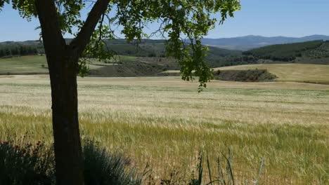 Spain-Meseta-Tree-Frames-Wheat-Field