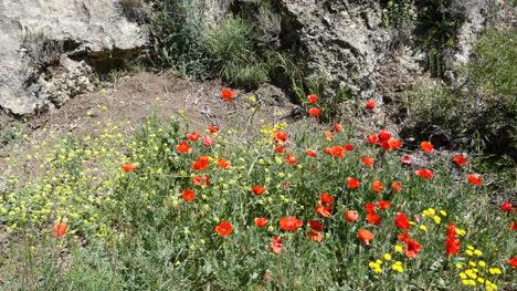 Spain-Poppies-In-Aragon-Sierras