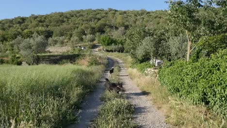 Spain-Pyrenees-Country-Lane-And-Dogs-Chasing-Stick