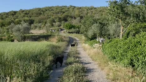 Spain-Pyrenees-Country-Lane-And-Dogs-Fetching-Stick