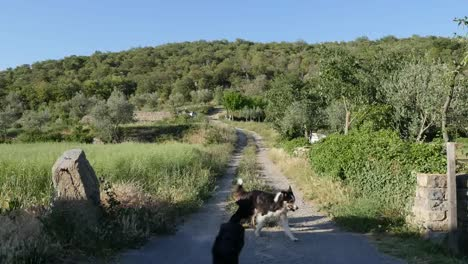 Spain-Pyrenees-Country-Lane-And-Dogs-Getting-Stick