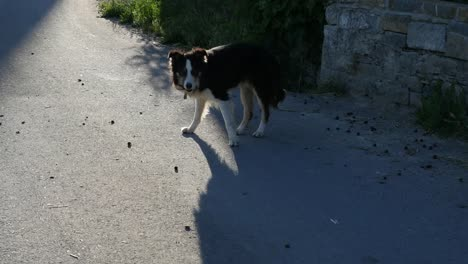 Spain-Pyrenees-Dog-And-Shadows
