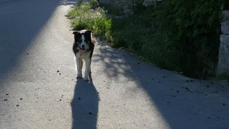 Spain-Pyrenees-Dog-Appears