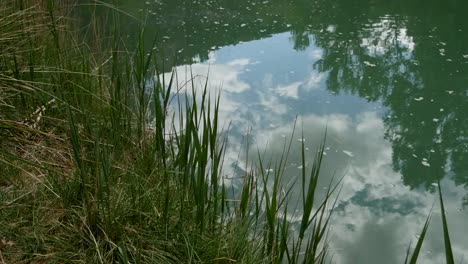 Spain-Rio-Jucar-Reflections-And-Reeds