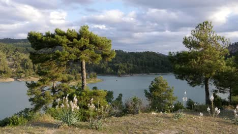 Spain-Serrania-De-Cuenca-Mountain-Lake-With-Pines-And-Flowers