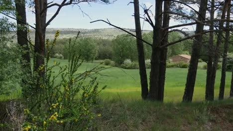 Spain-Sierra-De-Gudar-Wheat-Field-Between-Trees