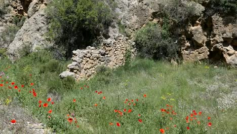 Spain-Poppies-And-Aqueduct-Ruin