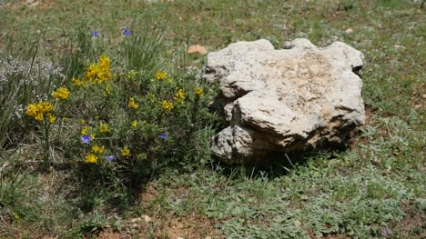Spain-Rock-And-Yellow-Flowers-On-Ground