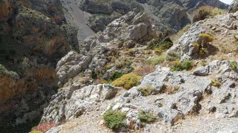 Greece-Crete-Kourtaliotiko-Gorge-Plants-Amid-Rocks