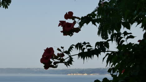 Greece-Crete-Flowers-And-Sea