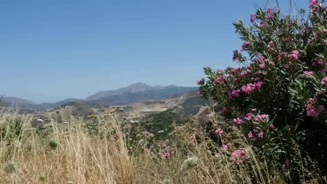 Greece-Crete-Hills-Grass-Blowing-And-Oleander