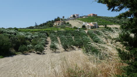 Greece-Crete-Orchard-And-Farms