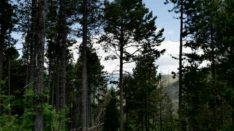 Spain-Pre-Pyrenees-Pine-Trees