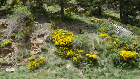 Spain-Pre-Pyrenees-Slope-With-Flowers