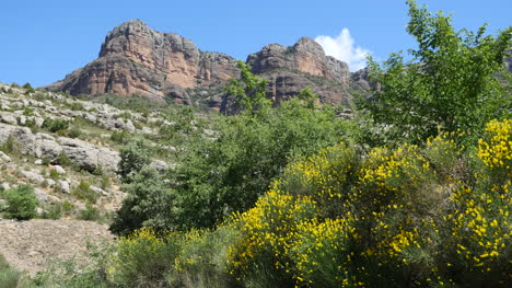 Spain-Pyrenees-Rocky-Cliffs-And-Spanish-Broom