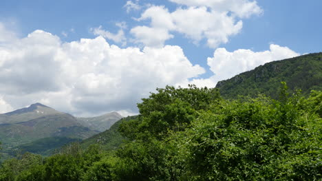 Spain-Pyrenees-Trees-On-A-Mountain-Slope