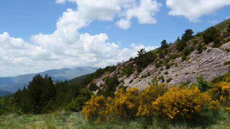 Spain-Pyrenees-View-With-Yellow-Flowers-And-Rock-Face