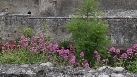 Ireland-Cahir-Castle-Wall-With-Flowers-Tilt-Up