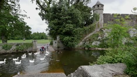 Ireland-Cahir-Grandparents-Feeding-Geese-And-Ducks