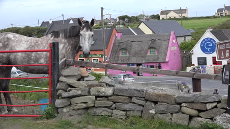 Ireland-County-Clare-Horse-At-Doolin-Village