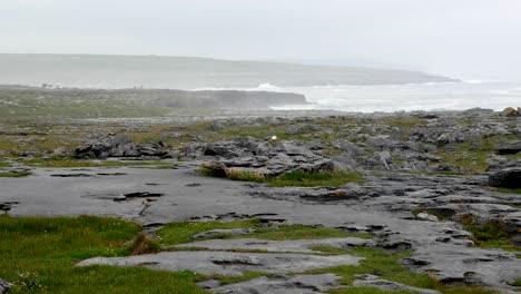 Ireland-County-Clare-Limestone-Rocks-On-Coast