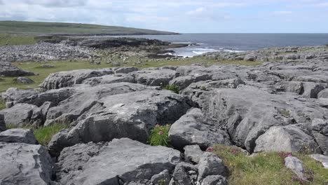 Ireland-County-Clare-Rocks-Of-The-Burren-With-Flower-In-Crack