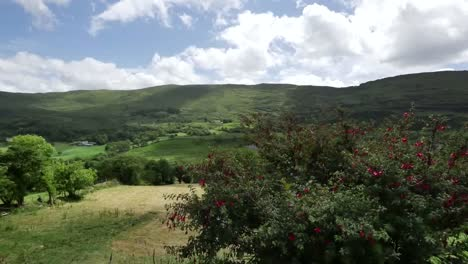Ireland-County-Kerry-Hills-Field-And-Fuchsia-Shrub