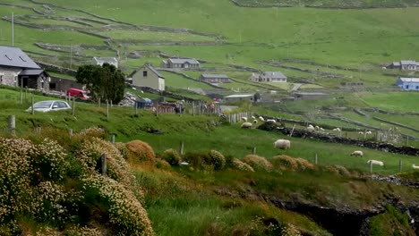 Ireland-Dingle-Peninsula-Farm-Buildings-Pan