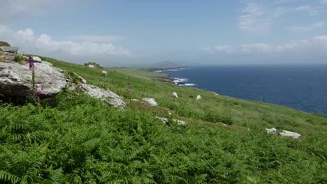 Ireland-Dingle-Peninsula-Hillside-With-Sheep