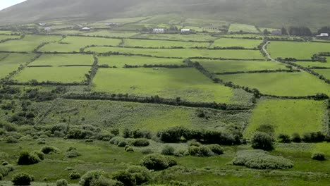 Ireland-Dingle-Landscape-With-Hedgerows