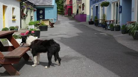 Ireland-Dingle-Street-With-Dog