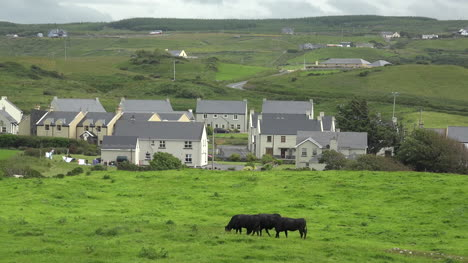 Ireland-Doolin-Houses-And-Cows