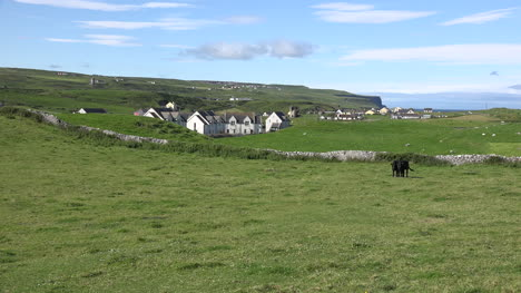 Ireland-Doolin-View-With-Black-Cows-And-Houses