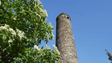 Ireland-Glendalough-Round-Tower-Top-With-Elderflower-Shrub-Zoom-In