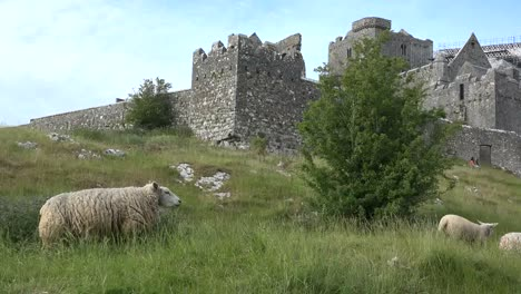 Ireland-Rock-Of-Cashel-View-From-Below-With-Sheep