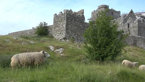 Irlanda-Rock-Of-Cashel-Vista-Desde-Abajo-Con-Ovejas
