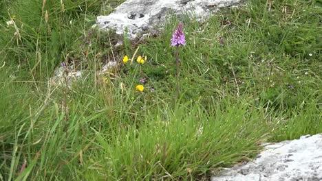 Irlanda-La-Hierba-Burren-Y-La-Orquídea