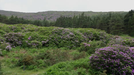Ireland-The-Vee-Rhododendron-Covered-Hillsides