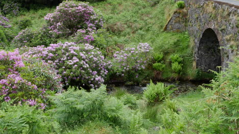 Ireland-The-Vee-Stone-Bridge-With-Rhododendrons