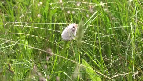 Ireland-Clara-Bog-Harestail-Cottongrass-And-Grass