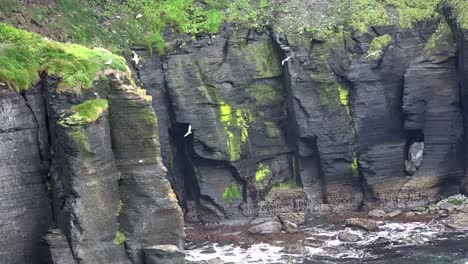 Ireland-County-Clare-Cliffs-Of-Moher-With-Birds-Flying