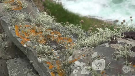 Ireland-County-Clare-Mosses-And-Lichens-On-Rocks