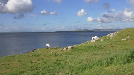 Ireland-County-Galway-Coast-With-Horses-In-Sun