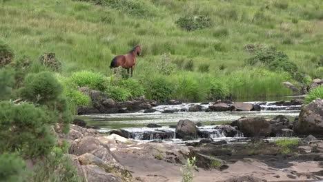 Ireland-County-Mayo-Horse-By-A-Mountain-Stream