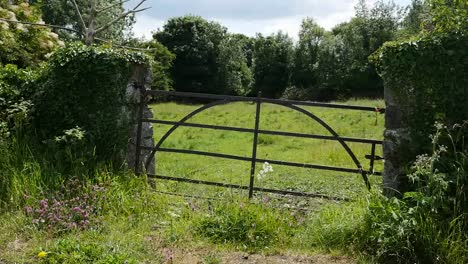 Ireland-County-Offaly-Old-Gate-To-Pasture