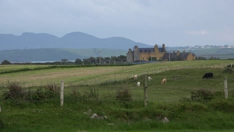 Ireland-County-Sligo-House-And-Cattle-In-Pasture